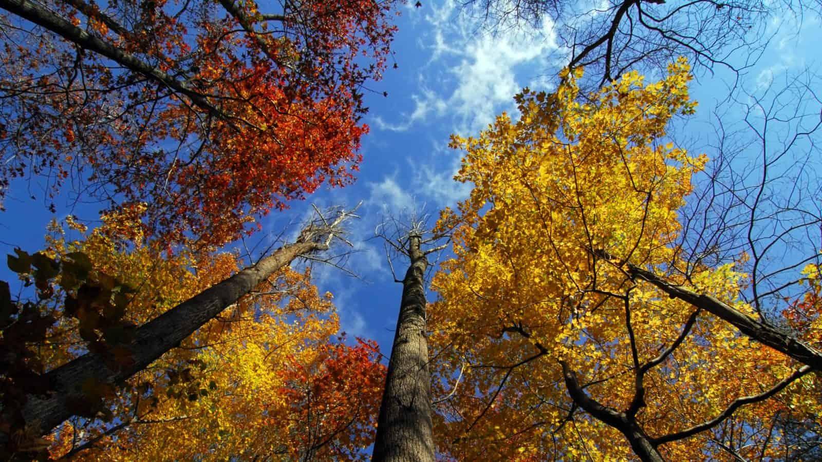 Autumn trees with blue sky