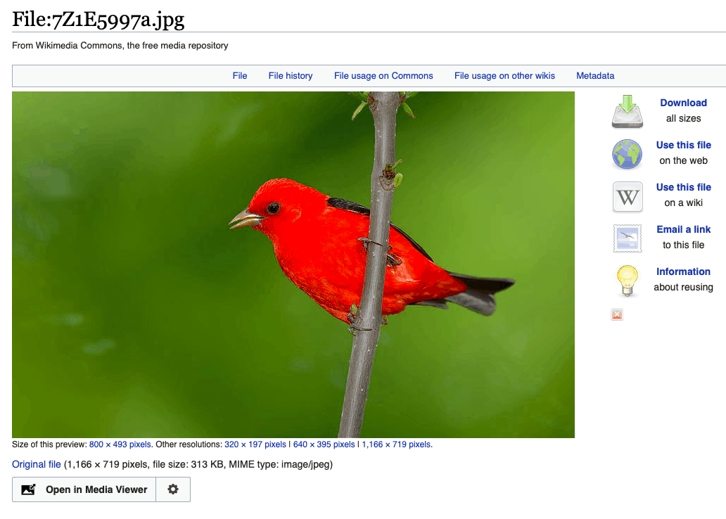 Scarlet tanager image on Wikimedia